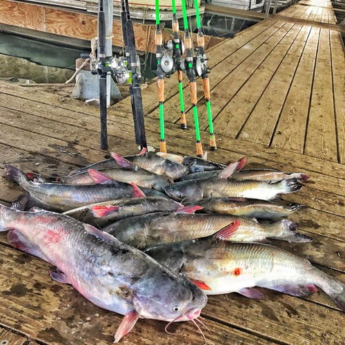 Lake tawakoni blue catfish report october 9 2017 for Lake tawakoni fishing guides